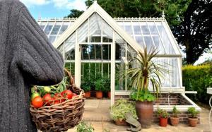 greenhouse gh35 (1)